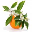 Eau de fleur d'oranger Bio, 100 ml